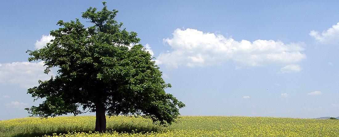 Damit die Bäume ...