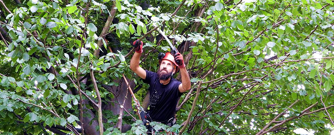 Baumpflege Markus Paggitz